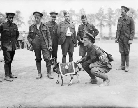 The Mascot (3rd Canadian Infantry Battalion)