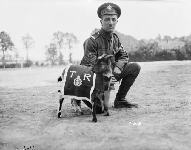 3rd-battalion-mascot-mikan-no-3405915.jpg